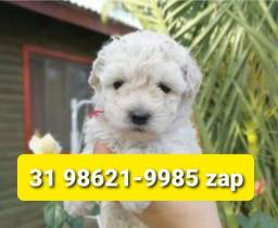 Título do anúncio: Cães Filhotes em BH Diversas Raças Poodle Yorkshire Maltês Basset Lhasa Beagle Shihtzu