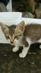 Adoção de dois gatinhos que estão precisando de um lar