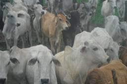 1.240 Alqueires (6000 hectares) a venda no Pará zap (91)988697836