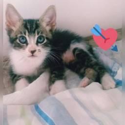 Gatinhos para adoção urgente