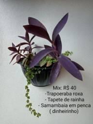 Título do anúncio: Lindas plantas a venda .