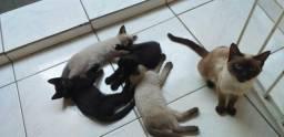 Gatos doação