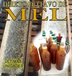 Título do anúncio: Mel de Abelha Italiana direto do Norte