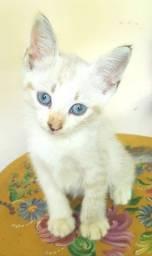 Título do anúncio: Três Gatinhos Filhotes para Adoção Responsável
