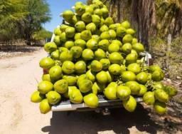Título do anúncio: Coco Verde da Bahia