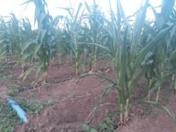 Fazenda com 20 hectares em jardims proximo do arena 100% irrigada