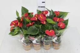 Venda e Aluguel de Plantas e Flores