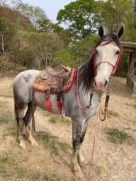 Título do anúncio: Vende-se cavalo macha picada