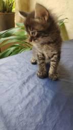 Gatinhos para adoção entrego