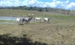 Excelente fazenda, 33,5 tarefas, próximo a cidade e asfalto