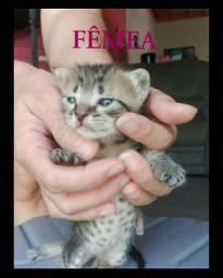 Doação linda gatinha TIGRADA