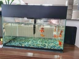 aquario 72 litros completo