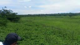 Fazenda em Pilão Arcado - BA