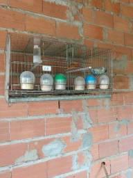 Vendo gaiolas criadeiras