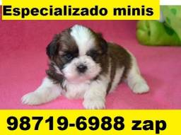 Canil Top Filhotes Cães BH Lhasa Bulldog Yorkshire Shihtzu Maltês Beagle Poodle