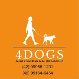 4Dogs- passeio com o seu cãozinho