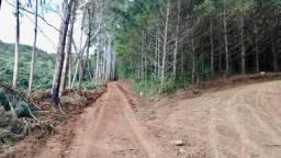 Arrendo propriedade rural 70 km de curitiba - 10 hectares com agua sem casa