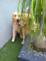Hospedagem para Cachorro