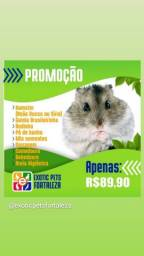 Combo Hamster Completo
