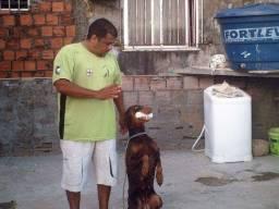 Treinador de Cães 150,00