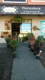 Vendo Floricultura R$ 9.800,00