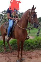 Cavalo top 8 anos