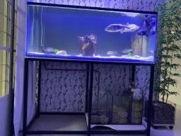 Vendo Aquario 1,50 x 60 x 60 completo