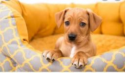 Título do anúncio: Procuro cachorro filhote pra adotar