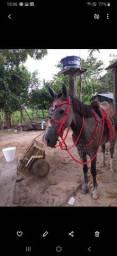 Traía pra cavalo