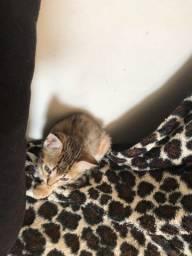 Doação de 2 gatinhas