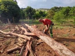esta precisando de poda de árvores vamos fazer um orçamento