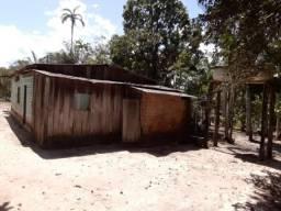Fazenda Com Gado e Muitos Pés de Açaí Há Apenas 55 Km de Porto Grande Pela BR 210