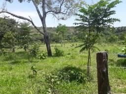 Fazenda Palmas