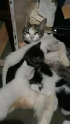Adoção de gatos filhotes