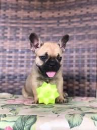 Bulldog Femea com pedigree cbkc!