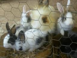 PROMOÇÃO filhotinhos de coelho!