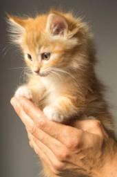 Gato adoto