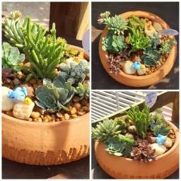 Suculentas terrarios mini jardim