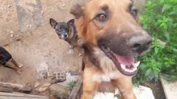 Cachorro médio porte