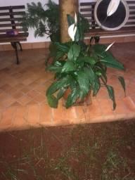 Título do anúncio: Plantas e vasos