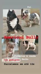 Título do anúncio: American bully