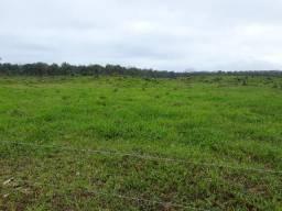 Fazenda Plana em Itapoá, Criação de Gado ou Plantio, Aceita Parte em Permuta