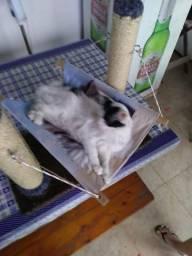 Brinquedo de gato com arranhador