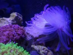 Aquario marinho 100 litros