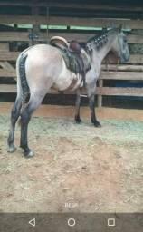 Vendo cavalo mangalarga marchador sangue Favacho e Jb, aceito propostas!