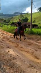Vendo ou troco cavalo marcha batida