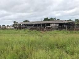 590 alqueirão a 20 mil o alqueire na alça viaria no Pará Fazenda pronta zap(91)988697836