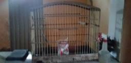 Vendo essa gaiola r$ 50