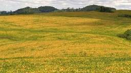 Fazenda de terra roxa para venda próximo a Nova Tebas!!!