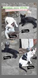 Doação Gatos 3 meses